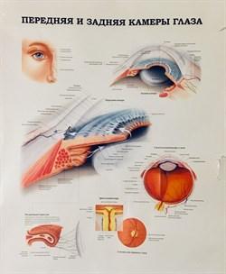 """Плакат """"Передняя и задняя камеры глаза"""" - фото 5150"""