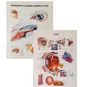"""Комплект Плакат """"Глаз""""+ Плакат """"Передняя и задняя камеры глаза"""""""