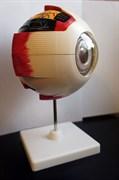 Анатомическая модель глаза